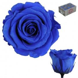 Rosa Estandar Azul (x6 ud)