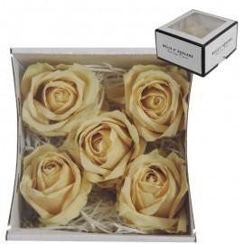 Rosas Avalanche Crema (5 ud)