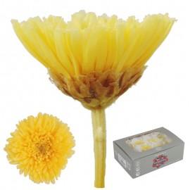 Sharp Crisantemo Amarillo...