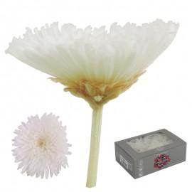 Sharp Crisantemo Blanco (8ud)