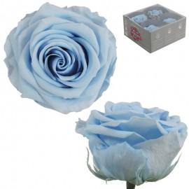 Rosa Premium Celeste (x4 ud)