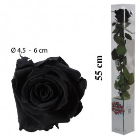 Rosa Amorosa Negra Caja ↕...