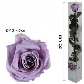 Rosa Amorosa Lila Caja ↕ 55 cm