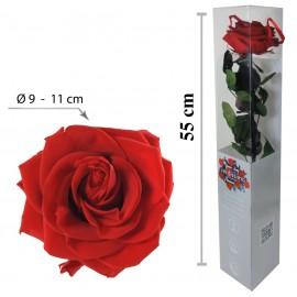 Rosa Premium con Tallo Rojo...