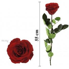 Rosa Premium Granel Rojo ↕...