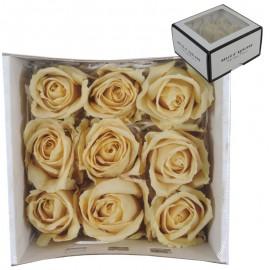 Rosas Avalanche Crema (9 ud)