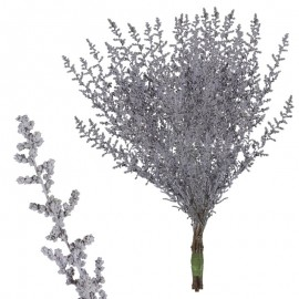Stoebe Purpura Suave 30-50 cm