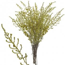 Stoebe Amarillo 30-50 cm