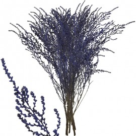 Stoebe Violeta 30-50 cm
