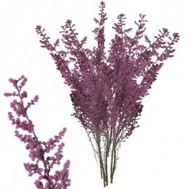 Stoebe Cereza 30-50 cm
