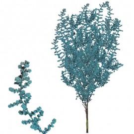 Stoebe Verde Agua 30-50 cm