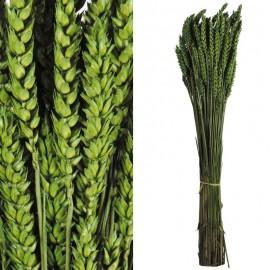 Trigo Flor Verde 200 grs