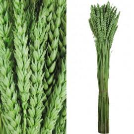 Trigo Flor Verde Claro 200 grs