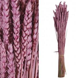 Trigo Flor Purpura Fuerte...