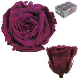 Extra Rosa Ø 6 cm Byzantium...