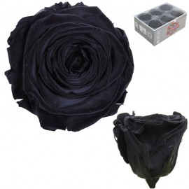 Extra Rosa Ø 6 cm Negro (6...