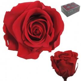 Rosa Estandar Roja (x6 ud)