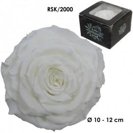 Rosa King Ø 12 cm Blanca (1...
