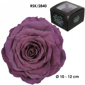 Rosa King Ø 12 cm Purpura...