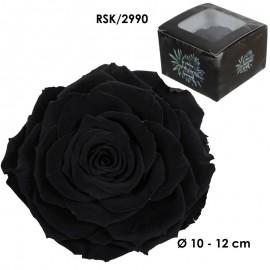 Rosa King Ø 12 cm Negra (1 ud)