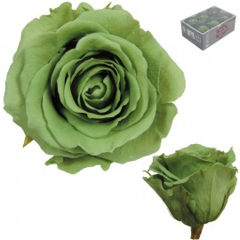 Rosa Estandar Verde Te (x6 ud)