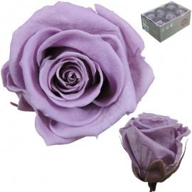 Rosa Estandar Lila (x6 ud)