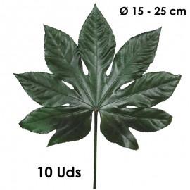 Aralia Hojas 15-25 Verde...