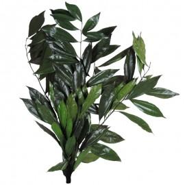 Cocolus Verde 40-80