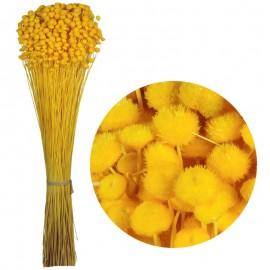 Amarelino Amarillo 100 grs