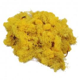 Musgo Finlandes Amarillo...