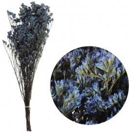 Limonium Pres Azul 75 grs