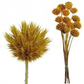 Echinops Pequeño Amarillo