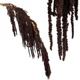 Amarantus Pres. ↕ 70 cm Marron