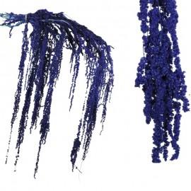Amarantus Pres. ↕ 70 cm Morado