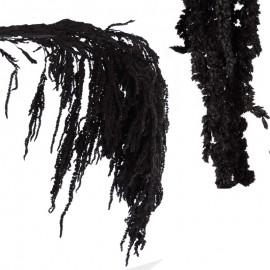 Amarantus Pres. ↕ 70 cm Negro
