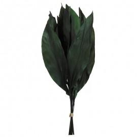 Hoja Aspidistra Verde (12ud)