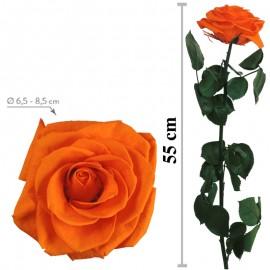 Rosa Premium Granel Naranja...