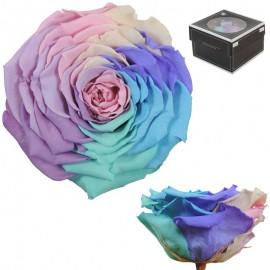 Rosa XXL Arcoiris Pastel (1...