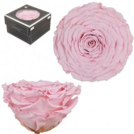 Rosa Waira Rosa Vintage (1 ud)