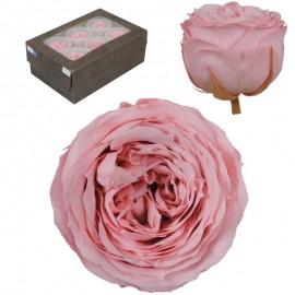 Rosa Inglesa L Rosa Vintage...