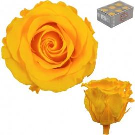 Rosa Estandar Amarillo (x6 ud)