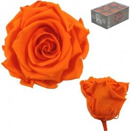 Rosa Estandar Naranja (x6 ud)