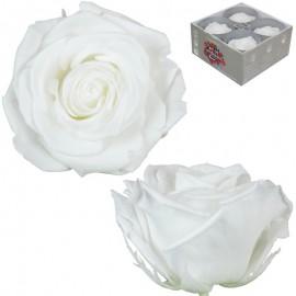 Rosa Premium Blanca (x4 ud)