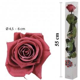 Rosa Amorosa Cranberry Caja...