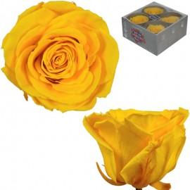 Rosa Premium Amarillo (x4 ud)