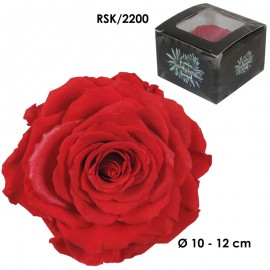 Rosa King Ø 12 cm Rojo (1 ud)