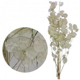 Lunaria Press Blanca