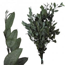 Eucaliptus Gunny Verde Pres.