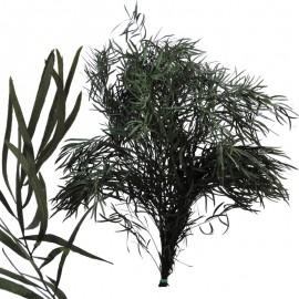 Eucaliptus Nicoly Verde Pres.