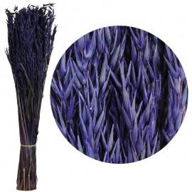 Avena Sativa Violeta Oscuro...